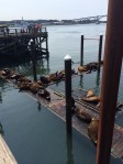 No visit is complete without a peek at the resident sea lions.